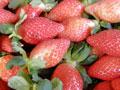 佳緣草莓園