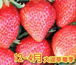 大湖草莓園推薦•大湖採草莓