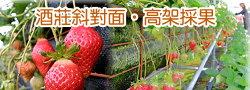 大湖冬之戀高架草莓園