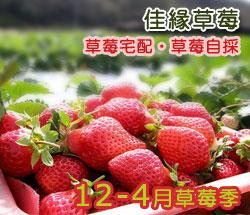 大湖佳緣草莓園