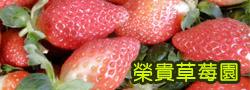 大湖草莓 榮貴草莓園