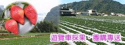 大湖晶晶草莓園